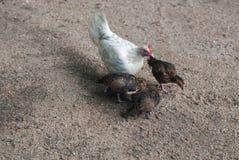 Family farm II royalty free stock photography