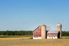 Family Farm Scene with Copy Space. Classic rural farm scene with a weathered red barn, silos, golden crops and a blue sky.  Copy space in sky if needed Royalty Free Stock Photo
