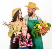Family farmers gardeners basket harvest isolated white background. Harvest festival concept. Parents and daughter. Farmers celebrate harvest holiday. Family stock photography
