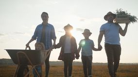 Family farmers are walking along the field at sunset, carrying box with fresh vegetables and tools for farming. Organic stock video footage