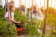 Family farmers working in garden Royalty Free Stock Photos