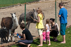 Family feeding animals in farm Stock Photo