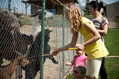 Family feeding animals in farm Royalty Free Stock Photos