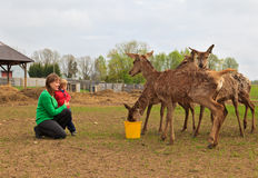 Family feeding deer Stock Images