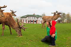 Family feeding deer Stock Photos