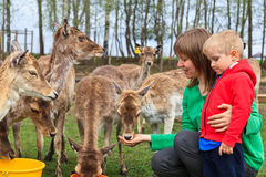 Family feeding deers Royalty Free Stock Image