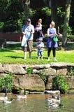 Family feeding ducks. Stock Photos
