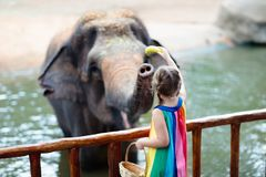 Kids feed elephant in zoo. Family at animal park. Family feeding elephant in zoo. Children feed Asian elephants in tropical safari park during summer vacation royalty free stock photos