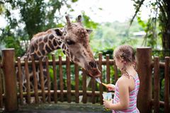 Family feeding giraffe in zoo. Children feed giraffes in tropical safari park during summer vacation. Kids watch animals. Little. Girl giving fruit to wild stock images