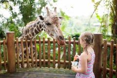 Kids feed giraffe at zoo. Children at safari park. Family feeding giraffe in zoo. Children feed giraffes in tropical safari park during summer vacation. Kids stock photo