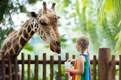Kids feed giraffe at zoo. Children at safari park. Family feeding giraffe in zoo. Children feed giraffes in tropical safari park during summer vacation in royalty free stock photos
