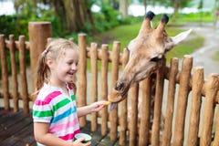Kids feed giraffe at zoo. Children at safari park. Family feeding giraffe in zoo. Children feed giraffes in tropical safari park during summer vacation in stock photos
