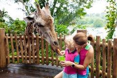 Kids feed giraffe at zoo. Family at safari park royalty free stock photography