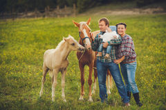 Family feeding horses in a meadow Stock Images