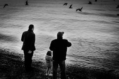 Family Feeding Seagulls On The Shore Stock Photos