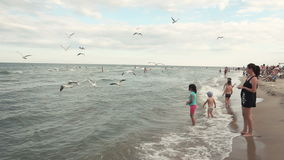 Family feeds seagulls on the seacoast stock footage