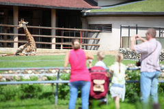 Family feeds and takes pictures  giraffe in zoo Royalty Free Stock Photos