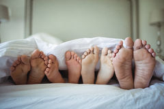 Family feet sticking out from under the bed sheet. Close-up of family feet sticking out from under the bed sheet stock photography