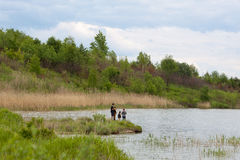 Family fishing on a lake Royalty Free Stock Images