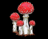 Family of fly agaric mushrooms isolated on white background. Vector Illustration Stock Photo