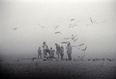 Family on foggy beach with seagulls Royalty Free Stock Photo