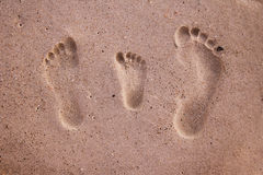 Family footprints in the sand Stock Photos