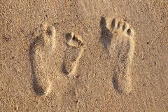 Family footprints in the sand on the beach. Mother, father and kid royalty free stock image