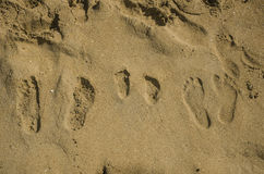 Family footprints in the sand Stock Image