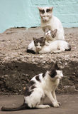 Family of four cats on the stone porch Royalty Free Stock Photo