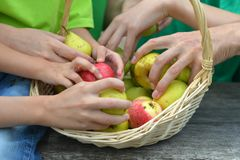Family with fruits basket Stock Images