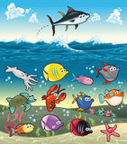 Family of funny fish under the sea. Stock Images