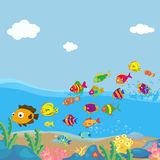 Family of funny fish under the sea Stock Photography