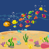 Family of funny fish under the sea Royalty Free Stock Photo