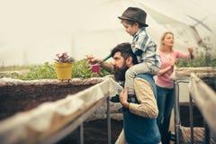 Family garden. happy family work in garden. family garden concept. family seeding in greenhouse garden. taking good care stock images