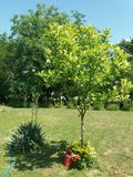 Family garden in the serbian village. Wild beauty. mowed lawn stock photography