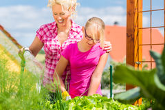 Family at gardening  in front of their home Royalty Free Stock Images