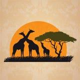 Family giraffe on meadow in african and sun retro vector art design Stock Photos