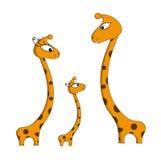 Family of giraffes stock images