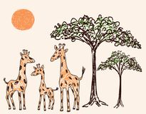 Family of giraffes in the hot savanna. Vector illustration of the cartoon giraffes under a baobab Stock Images