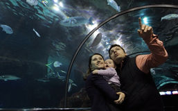 Family in Glass Aquarium Royalty Free Stock Photo