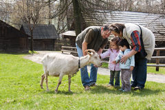 Family with goat. Family of parents or grandparents with two small children petting a goat on a farm Stock Image