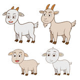 Family goat and kid, vector illustration on white background Stock Photos
