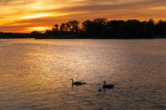 Beautiful sunset at river with gooses royalty free stock photos