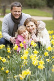 Family Group In Daffodils Royalty Free Stock Images