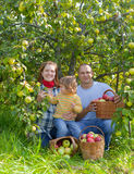Family with  harvested apples in garden Royalty Free Stock Images