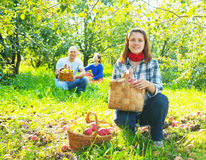 Family with  harvested apples Royalty Free Stock Images
