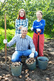 Family with harvested potatoes in field Stock Photography
