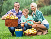 Family harvesting apples in garden Stock Photography