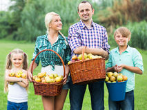 Family harvesting apples in garden Stock Images