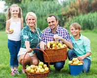 Family harvesting apples in garden Royalty Free Stock Photography